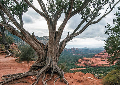 Photograph - Schnebly Hill Road View Sedona by Tam Ryan