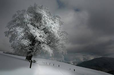 Lonely Tree Wall Art - Photograph - Schneeweg by Nicolas Schumacher