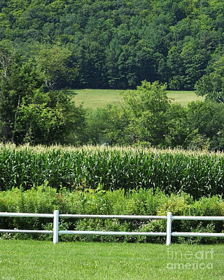 Photograph - Schoharie Ny Cornfield by Lizi Beard-Ward