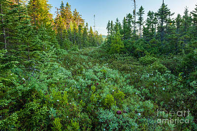 Photograph - Schoodic Bog by Susan Cole Kelly
