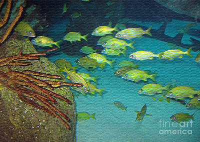 Photograph - School Of Fish by Connie Fox