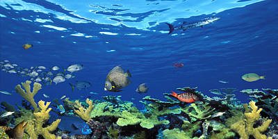 School Of Fish Photograph - School Of Fish Swimming In The Sea by Panoramic Images