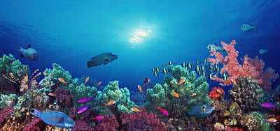 Fish Underwater Photograph - School Of Fish Swimming Near A Reef by Panoramic Images