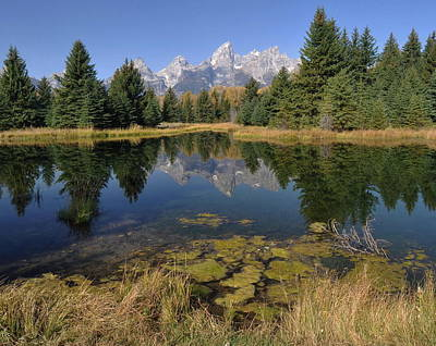 The Tetons Photograph - Schwabacher Landing Morning by Stephen  Vecchiotti