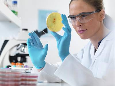 Technician Photograph - Scientist With Petri Dish by Tek Image