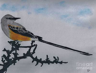 Drawing - Scissor-tailed Flycatcher by D Hackett