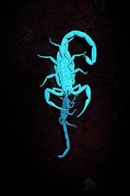 Feeding Photograph - Scorpion Feeding On Prey by Melvyn Yeo