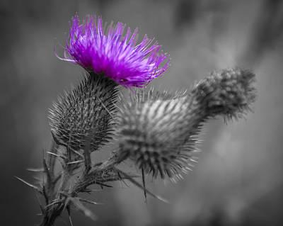 Fushia Photograph - Scotland Calls 1 by Scott Campbell