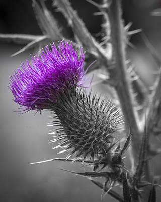 Photograph - Scotland Calls 2 by Scott Campbell