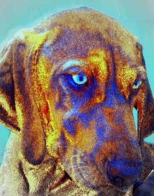 Photograph - Scottie The Rhodesian Ridgeback by Jodie Marie Anne Richardson Traugott          aka jm-ART