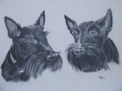 Drawing - Scotties by Sandra Muirhead