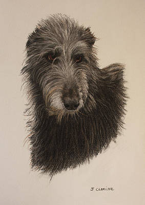 Scottish Dog Drawing - Scottish Deerhound by Jacqueline CLARISSE