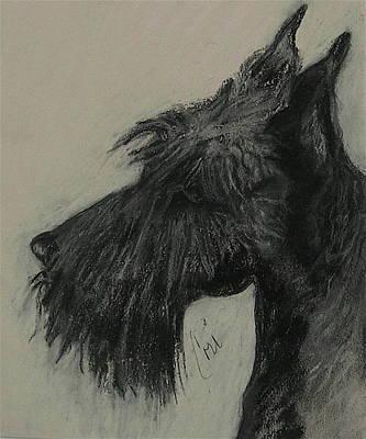 Scotties Drawing - Scottish Delight by Cori Solomon