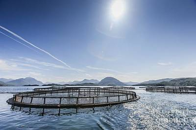 Torridon Wall Art - Photograph - Scottish Farmed Salmon Pens by Gustoimages