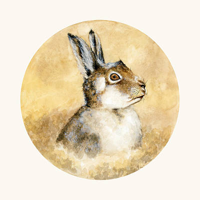 Scottish Hare Print by Nathalie Amber