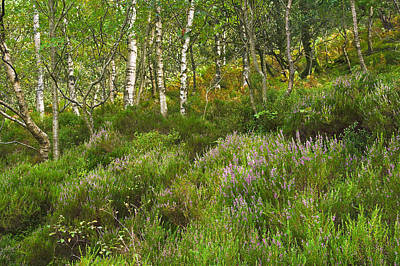 Photograph - Scottish Heather by Jane McIlroy