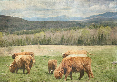 Photograph - Scottish Highland Grazing  by Betty  Pauwels