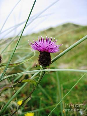 Loch Photograph - Scottish Thistle by Denise Railey