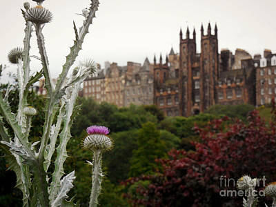 Photograph - Scottish Thistle by Valerie Reeves