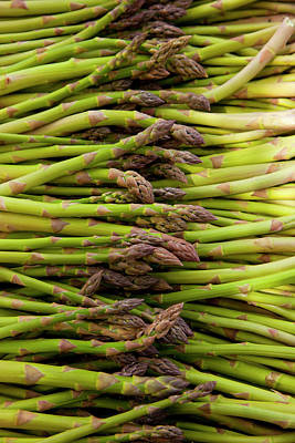 Asparagus Photograph - Scotts Asparagus Farm, Marlborough by Douglas Peebles