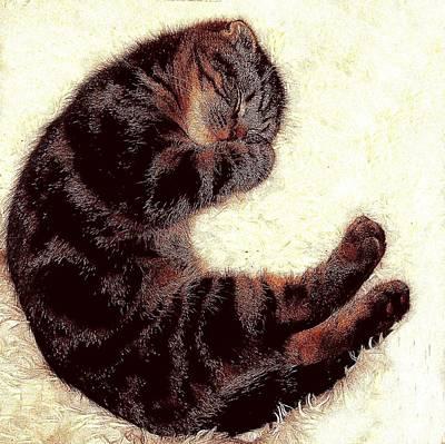 Digital Art - Scottsih Fold Sleeping 1b by Robert Morin