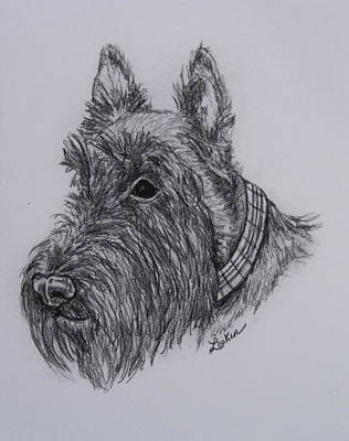 Scottish Dog Drawing - Scotty Dog by Cheryl Lynn Looker