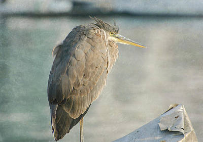 Photograph - Scrap Metal Heron by Fraida Gutovich