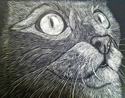 Mixed Media - Scratch Art Kitty Cat by Brenda Brown