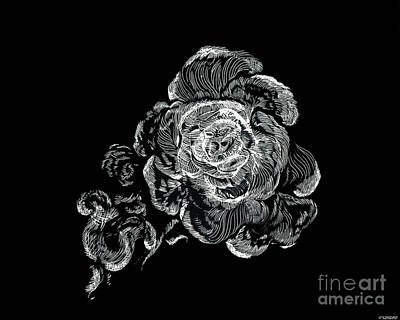 Drawing - Scratched Rose by Lizi Beard-Ward