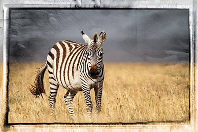 Scratched Tin Zebra Art Print