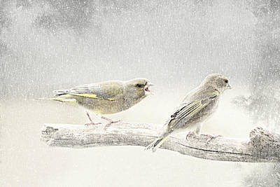 Finch Mixed Media - Screamers In The Snow by Heike Hultsch