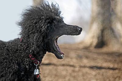 Best Friend Photograph - Screaming by Steven Michael