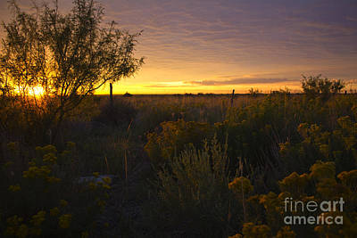 Photograph - Scrub Brush Sunrise by Alycia Christine