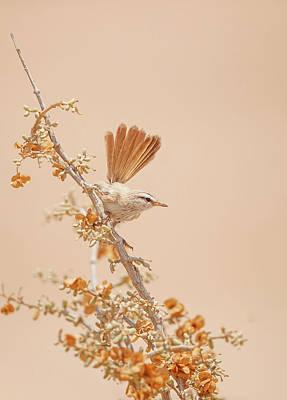 Warbler Wall Art - Photograph - Scrub Warbler by Shlomo Waldmann