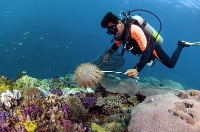 Scuba Diving On A Reef Art Print