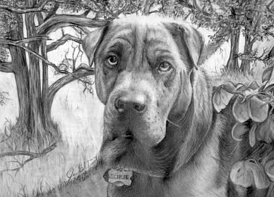 Dog Drawing - Scubie by John Balestrino