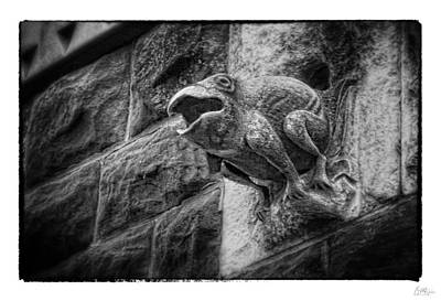Drain Photograph - Sculpted Frog - Art Unexpected by Tom Mc Nemar