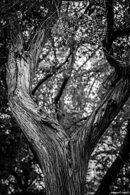 Photograph - Sculptured Bark by Melinda Ledsome