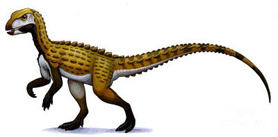 Scutellosaurus, An Early Jurassic Art Print by H. Kyoht Luterman