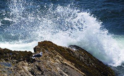 White Cap Digital Art - Detail Seagull Sea Spray by Barbara Snyder