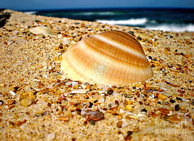 Sea Beyond The Shell Art Print by Kaye Menner