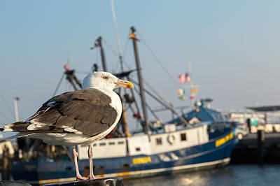 Seagull Photograph - Sea Bird by Bill Wakeley