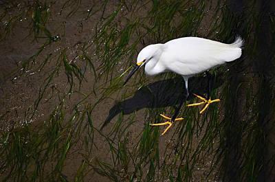 Carter Lake Photograph - Sea Bird by See My  Photos