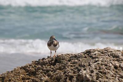 Photograph - Sea Bird by Jack Dean