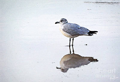 Photograph - Sea Birds No.1 by Melissa Sherbon