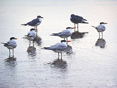 Photograph - Sea Birds No.2 by Melissa Sherbon