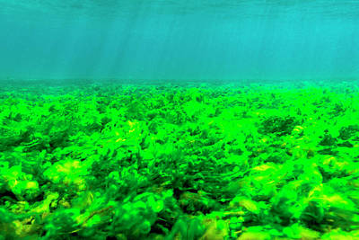 Sea Bottom Covered With Green Algae, St Art Print by James White