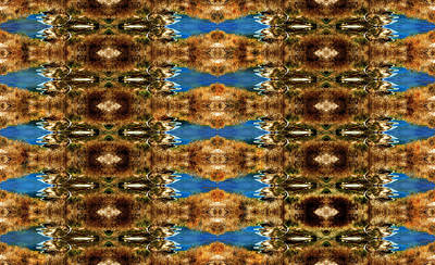 Middle East Photograph - Sea Carpet Ornament Photo Art by Yevgeni Kacnelson