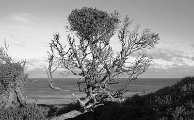 Photograph - Sea Cliff Tree by Amanda Holmes Tzafrir