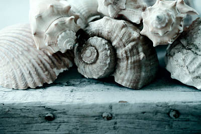 Sea Shell Photograph - Sea Gifts by Bonnie Bruno